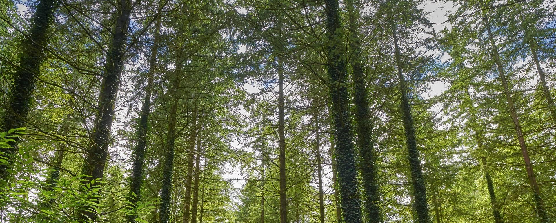Forêt de Pont-Calleck - Berné - © M-A Gouret-Puillandre