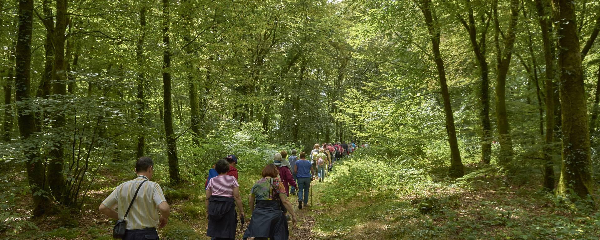 Sortie en forêt de Pont-Calleck © M-A Gouret-Puillandre