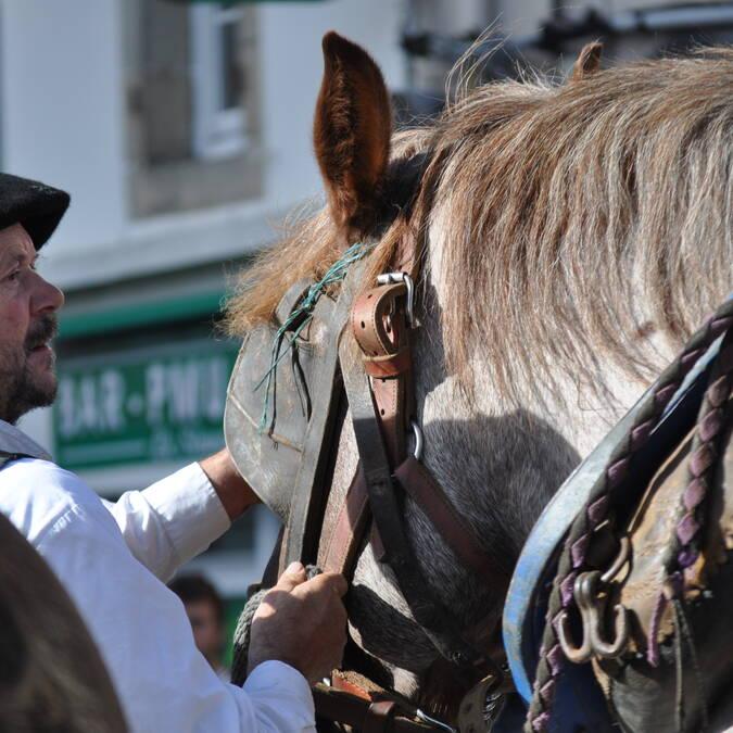 Draught horses in Le Faouët - © Lefaouët Infos