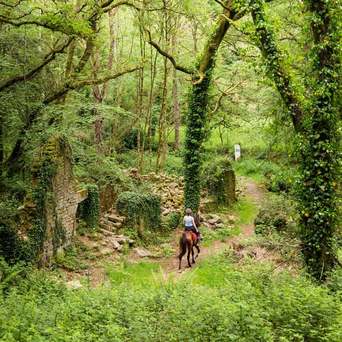 Vallée de Saint Maur Langonnet